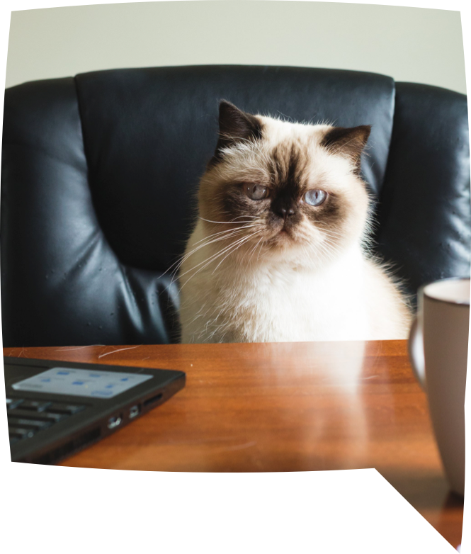 Cat looking like a boss and sitting at desk